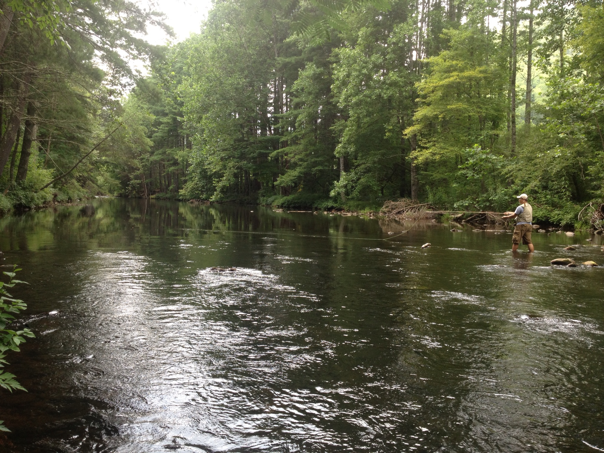 Fly fishing the pigeon river near asheville nc for Nc fish and wildlife