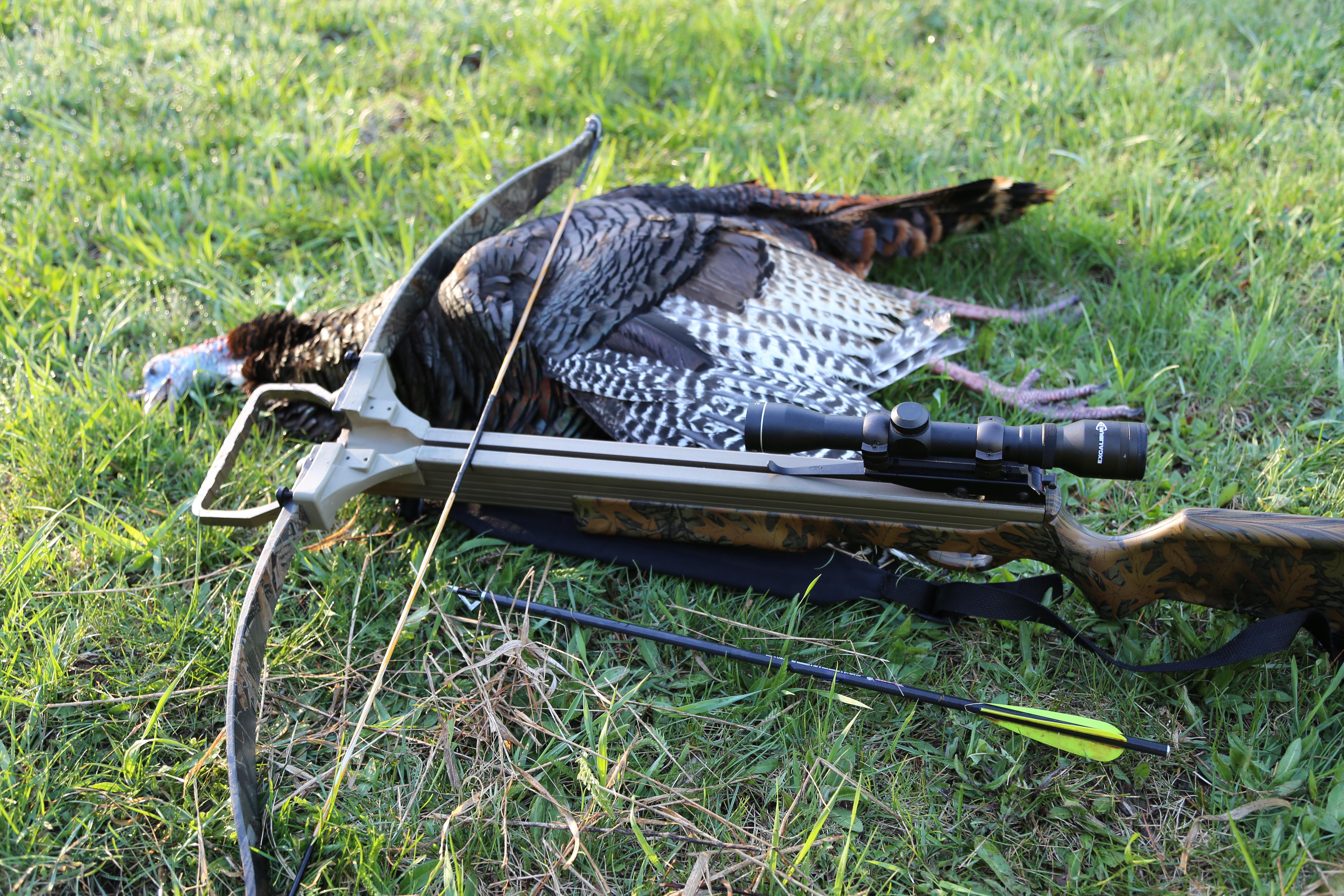 bowhunting vs gun hunting essay